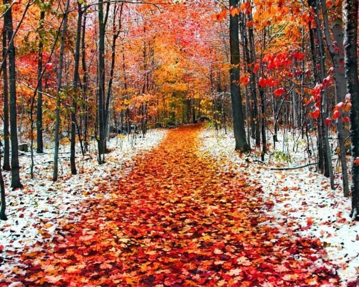 listopad-v-lese